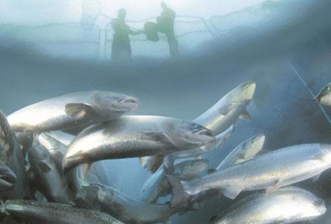 fisk i mære