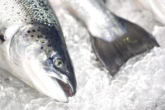 fisk på is